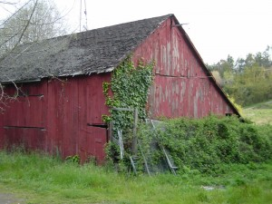 Old Roblar Road barn near Petaluma