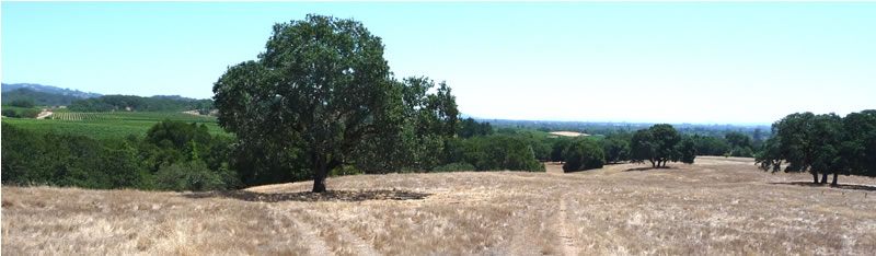 200 Acre Healdsburg Country Property – Views and Vineyard Potential