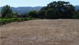 Views over Russian River Valley from a Chalk Hill parcel
