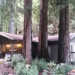 Cabin in the redwood